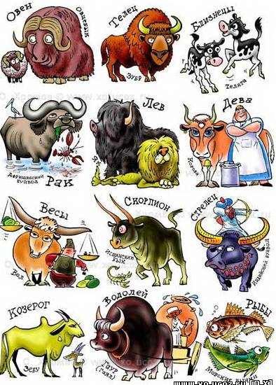 Compatibility with other signs of the bull